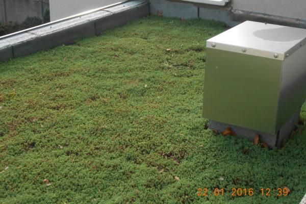 20 Groen dak